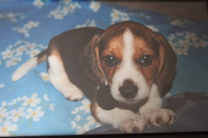 Tela as a tiny puppy